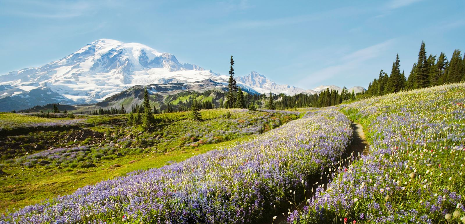 tehaleh-trail-at-Mount-Rainier-hero.jpg