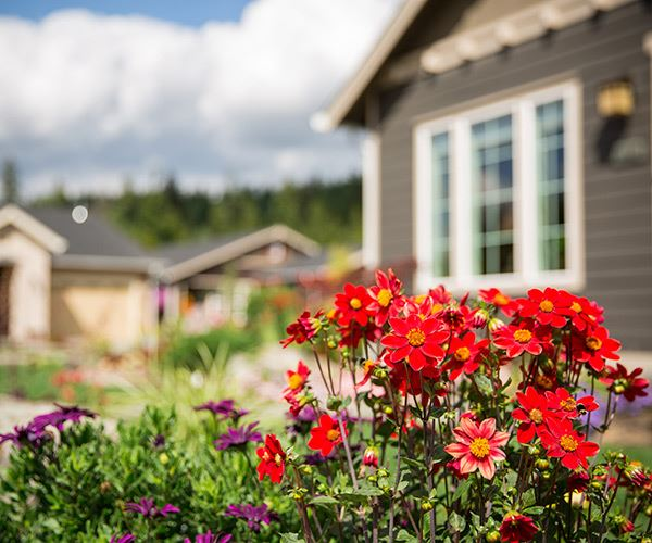 tehaleh-red-flowers-with-houses-in-the-background-southend.jpg