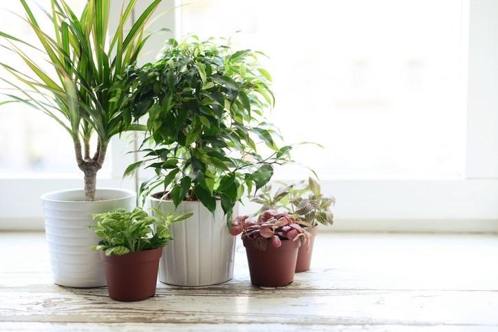 5 Pacific Northwest Friendly Houseplants